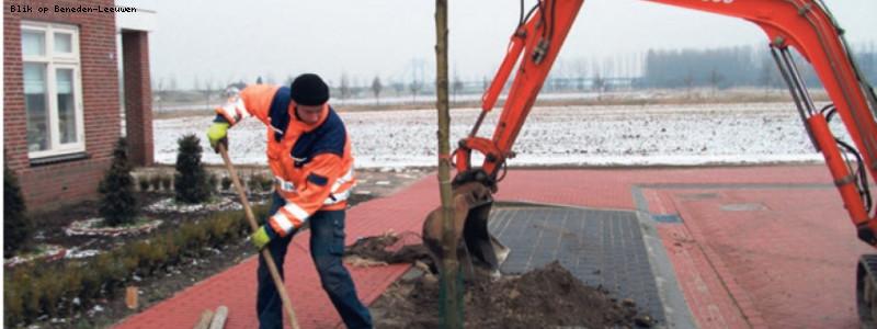 Nieuwe bomen in West Maas en Waal